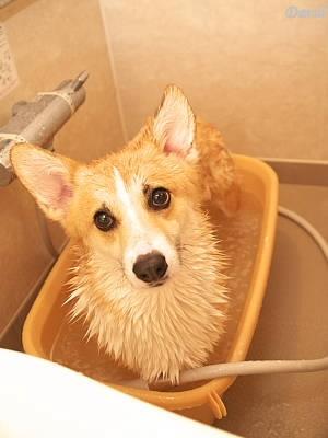 大好きな風呂の時間