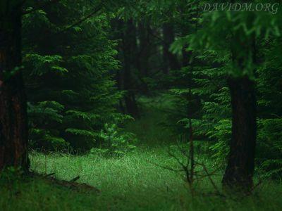 知床の深い森