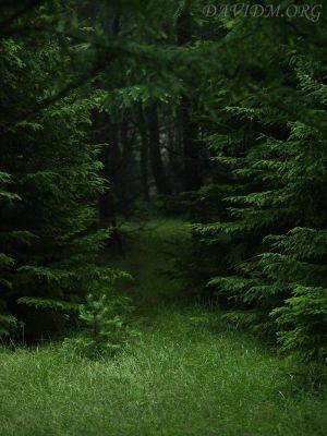 知床の深い森の写真