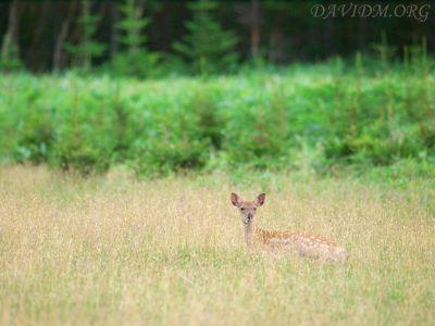 小鹿の写真