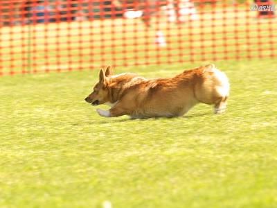 見事な走りのライラちゃん