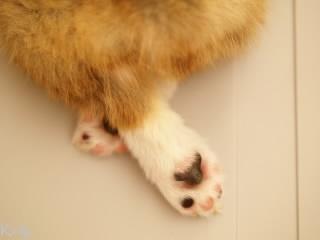 脚を組んでるコーギー
