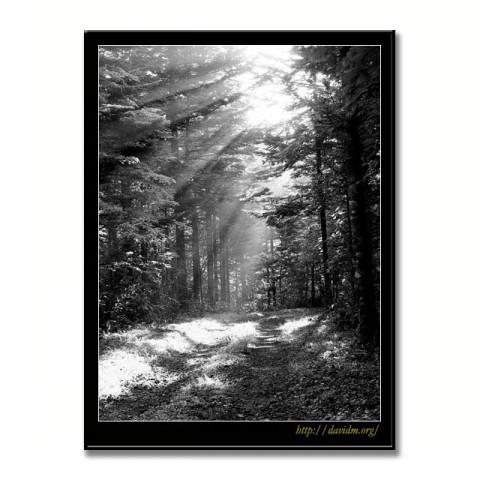 白老町の林道の写真