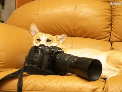 カメラを抱いて一眠り