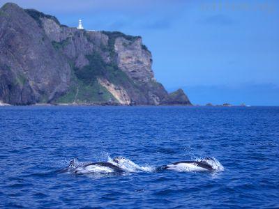 カマイルカと地球岬の写真