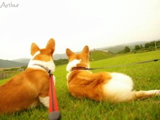 二人並ぶ芝生の上