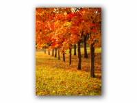 秋色の絨毯の壁紙