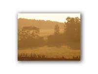 朝日を浴びる牧草地