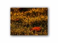 輝く秋の壁紙