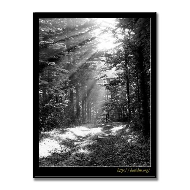登別から白老に抜ける霧の森 B&W