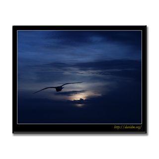 夕陽と飛ぶカモメ
