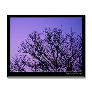 冬の朝の枯れ木