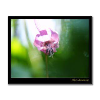 夢で見たカタクリの花