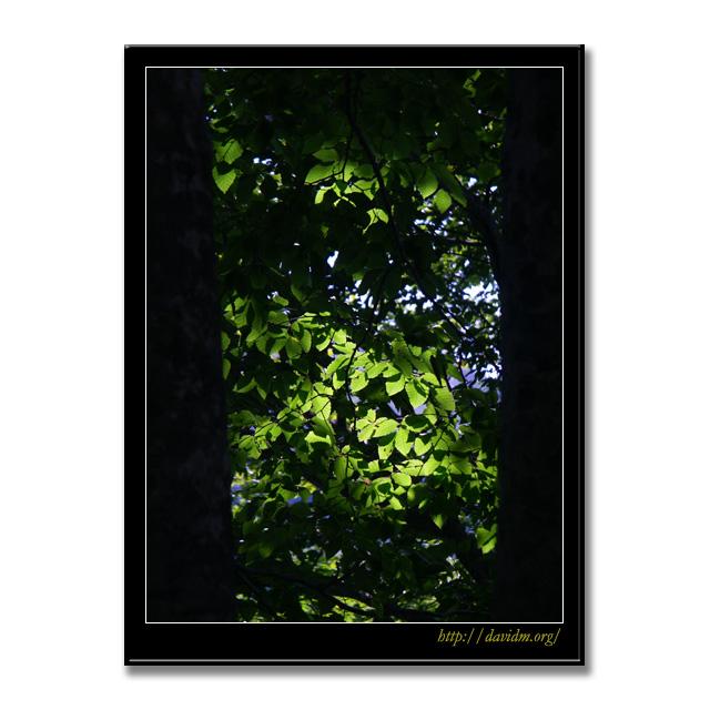 樹々の間からの光