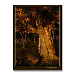 朝陽を浴びる洞爺湖畔の老木