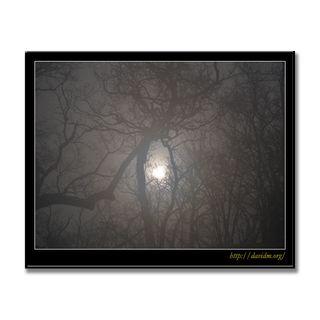 吹雪の森を照らす太陽