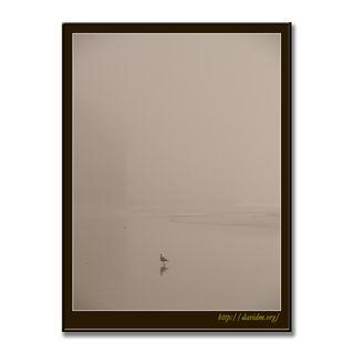 霧のイタンキを散歩する一羽のカモメ