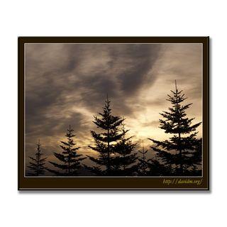 朝の森の空