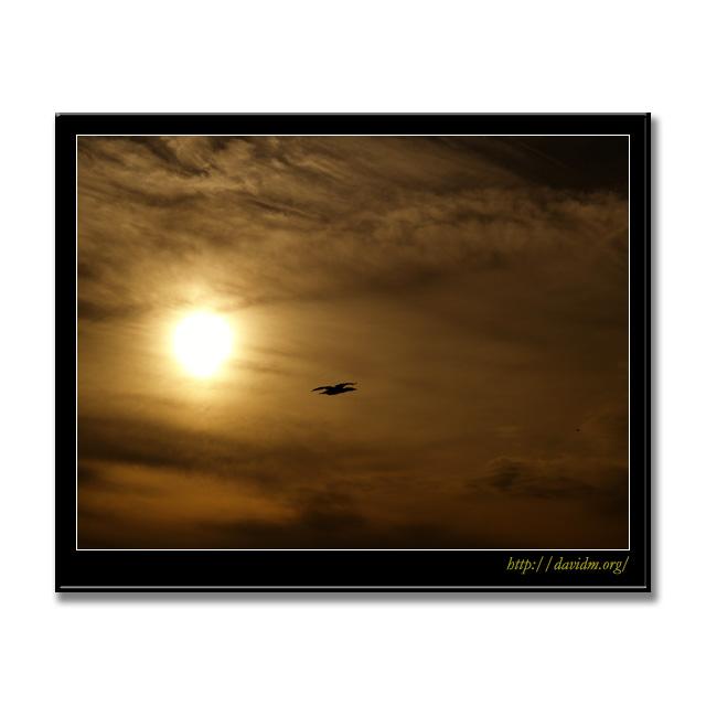夕陽をバックに飛ぶ鳥