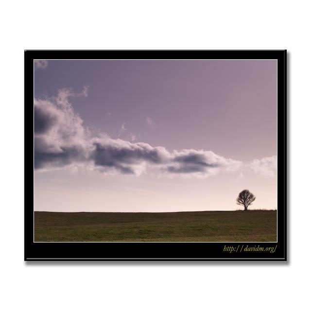 夕暮れの札内高原の木