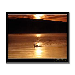 朝の洞爺湖とコブハクチョウ