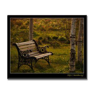 朝の柔らかい光とベンチ