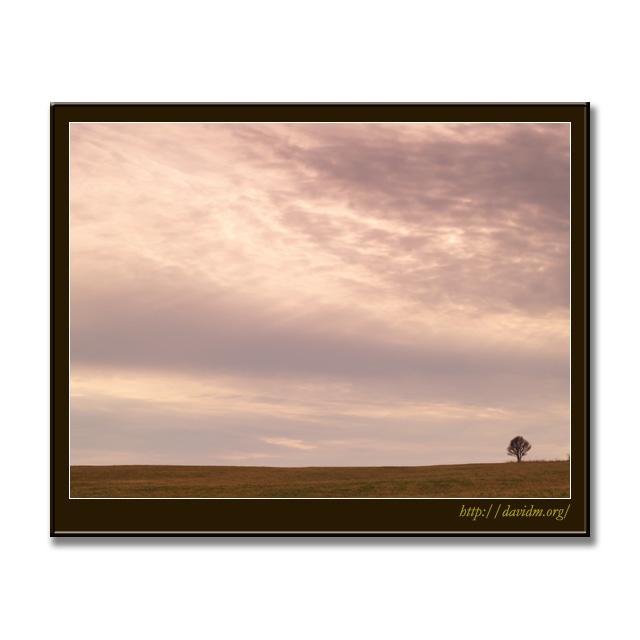 札内高原の一本の木