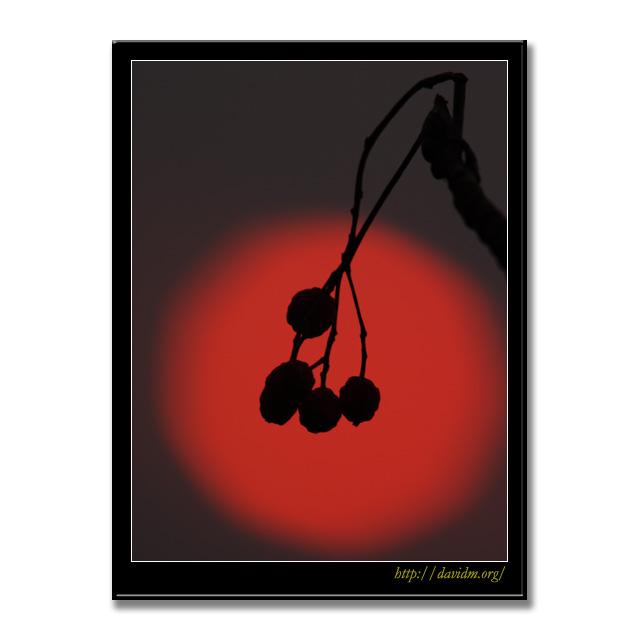 赤い太陽に浮かぶ