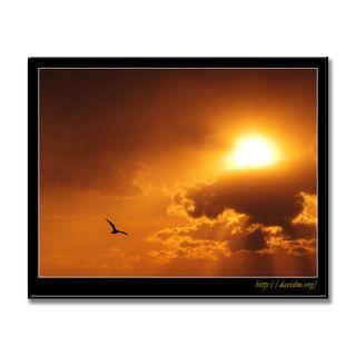 雲から覗く朝陽と飛ぶ一羽のカモメ