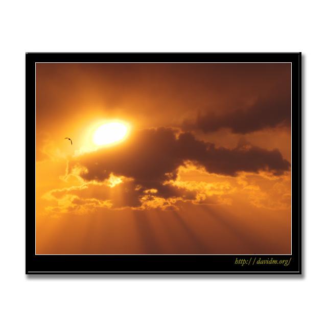 射しこむ朝陽と一羽のカモメ
