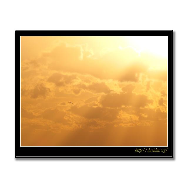 カモメと差し込む朝の光