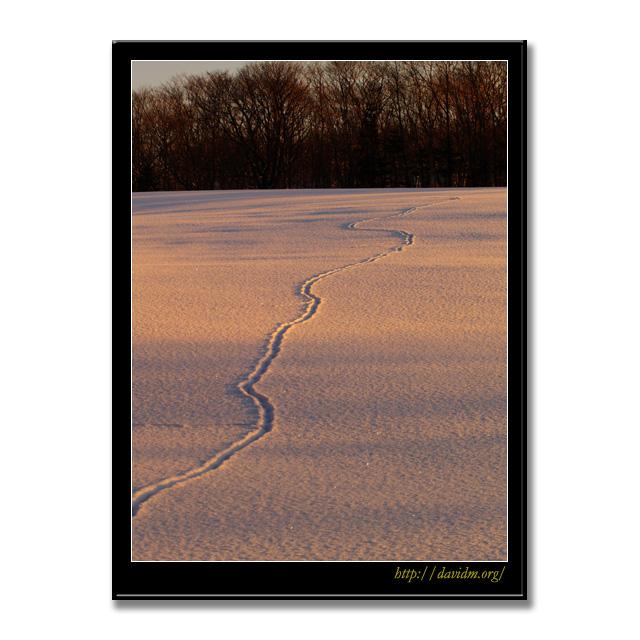 夕方の雪原を横切る動物の足跡