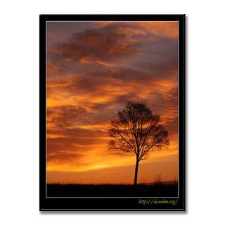 朝陽に浮かぶ一本の木