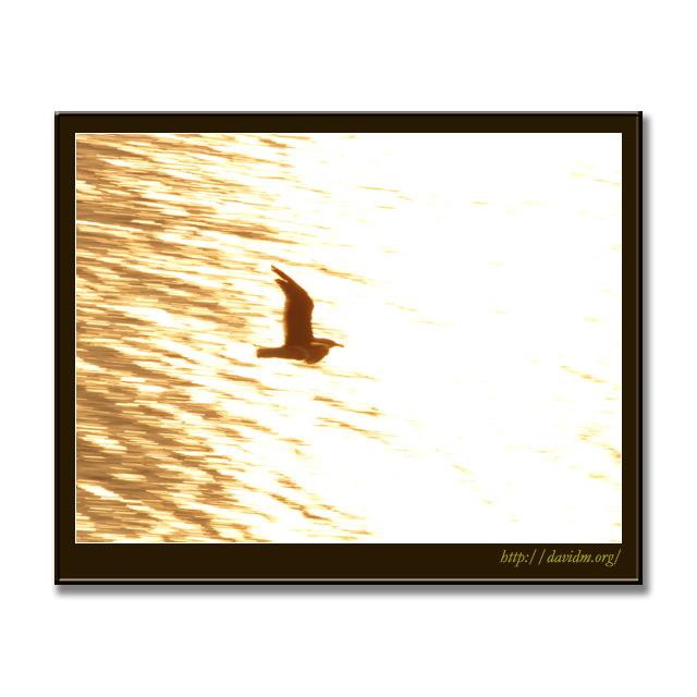 夕陽をの海を飛ぶカモメ