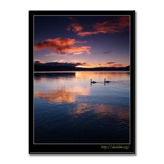 燃える雲を映す湖面をすべる2羽の白鳥の写真
