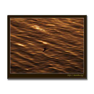 夕陽に染まる海面とカモメ