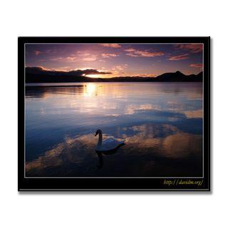 湖面に映る朝と白鳥の写真