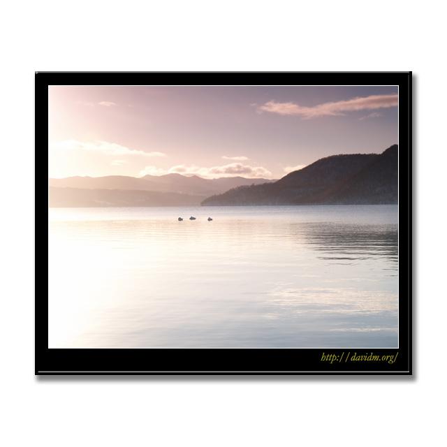 湖面で寝る3羽の白鳥の写真