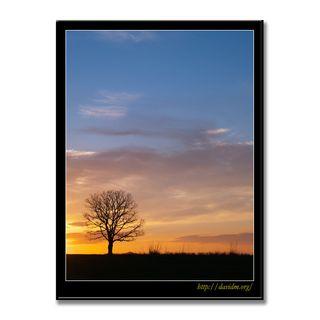 朝陽の中に佇む一本の木