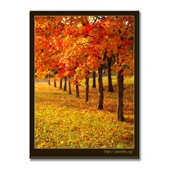 登別の紅葉並木