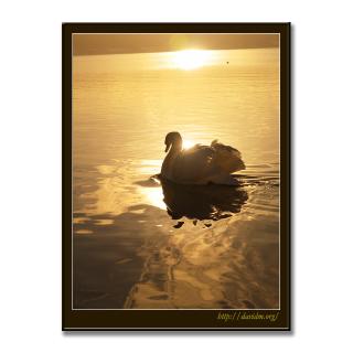 洞爺湖の朝の光と白鳥の写真