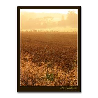 霧でかすむ伊達の田園地帯