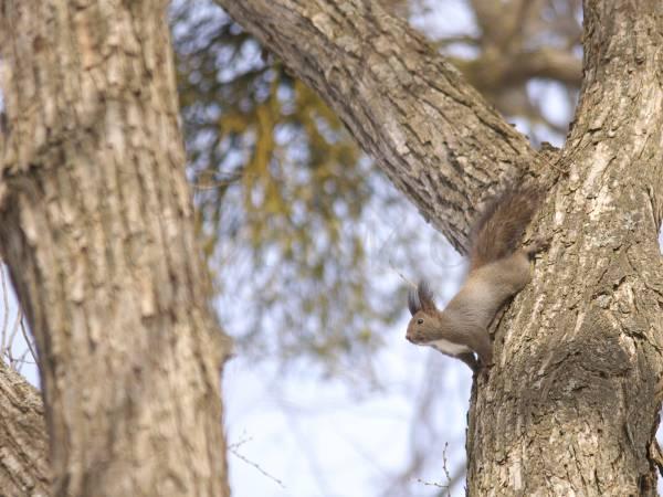 木の上のエゾリスの写真