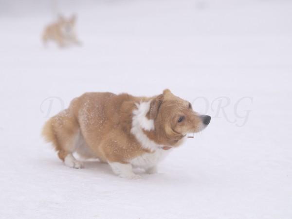 雪を落とすケリー