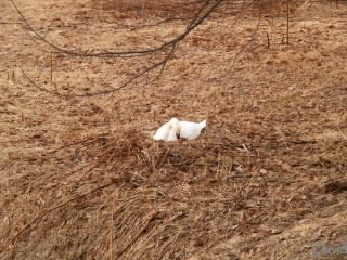 卵を抱く白鳥
