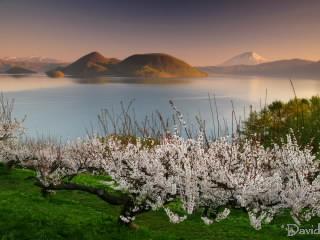 朝の洞爺湖と梅の花