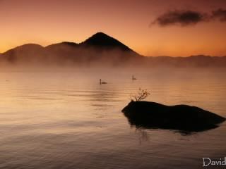 朝もやの洞爺湖と白鳥