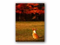 イヌも見とれる紅葉