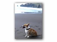 イタンキ浜と僕