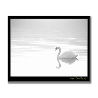 洞爺湖の白鳥 B&W